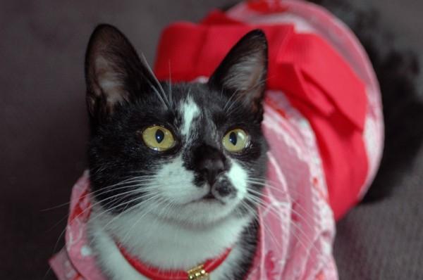 150906catkimono 600x398 - 猫の日本史:源氏物語に記された、猫デレ天皇譚の残欠