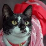 猫の日本史:源氏物語に記された、猫デレ天皇譚の残欠