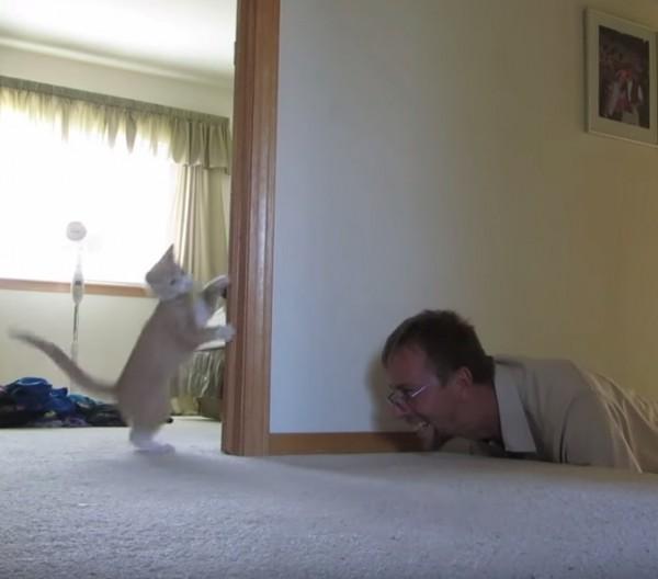 150919CATPLAY 600x528 - この連休中に、猫と一緒に遊びたくなる動画