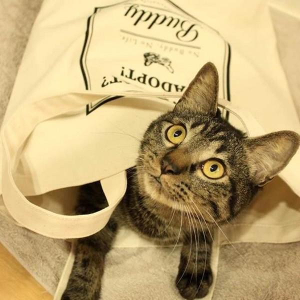 150921ecobug7 600x600 - 買うほどに猫が助かるエコバッグ、荷物運びも猫遊びにも