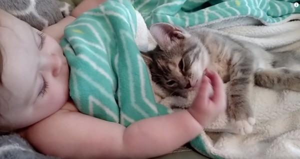 150925CATANDBABE 600x318 - 縦列添い寝の赤子と子猫、迷わすかわいさ主役はどちら