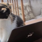 猫の印のパソコンを、我が物顔でいじる三毛猫
