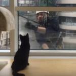 窓拭き見つめる健気な黒猫、手を振るおじさん顔なじみ