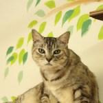 売れるたびに猫が助かる写真展、売上の一部を猫カフェに寄付