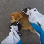 突然に道路へ現る茶色の子猫、ライダー気づいて危機一髪