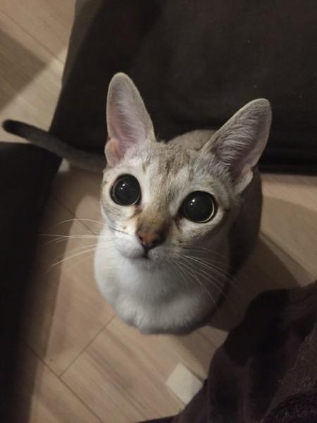 151022cat 450x600 - 本日の美人猫vol.159