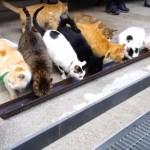 猫とのご縁を繋ぐ寺、ご飯タイムは横一列に