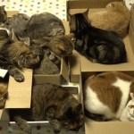 十猫十色の猫シェアハウス、ちょっかい出したり舐め合ったり