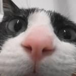 バブルのお風呂に浸かる猫、今年の疲れも水に流して