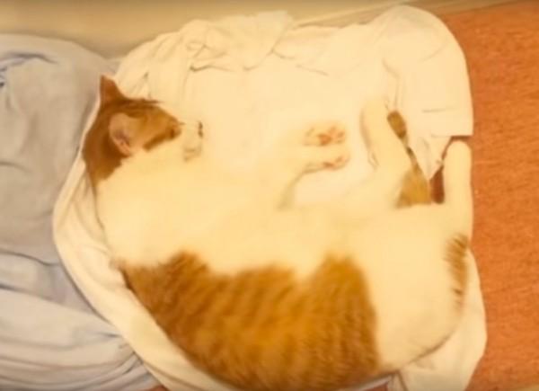 151219oyatsu 600x435 - 熟睡の茶白の猫も覚醒す、あの三文字の言葉とは