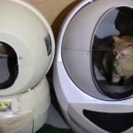新旧の猫のトイレの比較レビュー、空気を読んで実演する猫