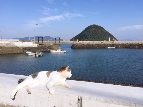 """151226sanagineko IMG 0916 600x450 - """"さなぎの猫""""の写真集で、香川の島が町おこしを目指す"""