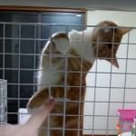 金網の向こうで猫は料理待ち、気になりすぎてその身は揺れる