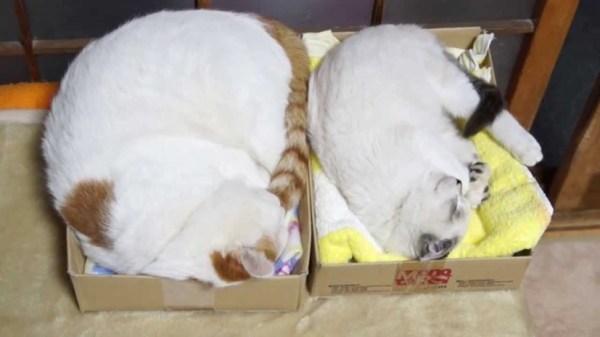 151230osechicats