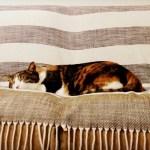 三毛猫お昼寝タイムラプス、寝相が崩れるとろけるように