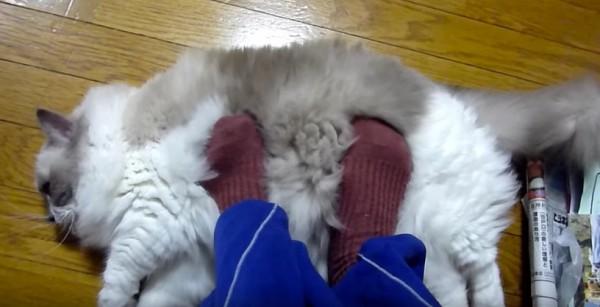 160116cat 600x307 - 一家に一台欲しくなる、猫のモフモフフットウォーマー