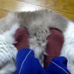 一家に一台欲しくなる、猫のモフモフフットウォーマー
