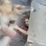 排水溝に落ちた猫、我が身を挺した女性が救出