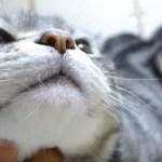 眠る飼い主起こす猫、上にどっかり喉をゴロゴロ