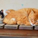 猫の顔見りゃオスメスわかる、獣医師教える4つのポイント