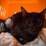 夜・休日の容体変化に備える、猫用の夜間救急診療機関