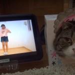箱猫コラボの猫動画、ほとんどシンクロせずマイペースぶりを発揮