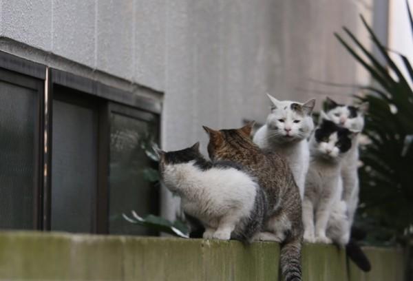 160203 11 600x408 - かわいい猫のレアな顔、ブサ顔集めた写真集