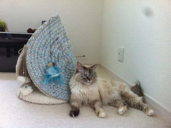 160215powwowmeow02 600x448 - ベッドと爪とぎ一つで二役、円錐様の猫ベッド