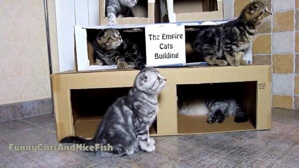160223theempirecatsbuilding