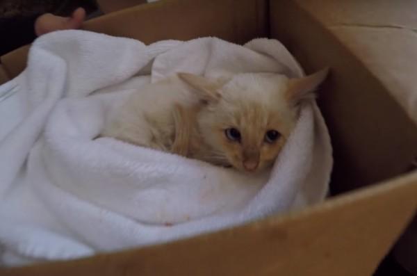 160310Lazarus 600x397 - 雪の中で凍えた子猫、1時間の心肺蘇生で奇跡の生還