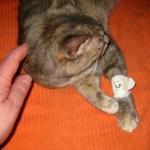 猫の緊急事態に備えておきたい、応急措置をまとめたサイト