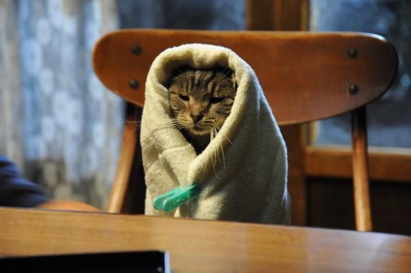 160313sekaneko 600x399 - ずっと一緒にいてほしい、猫の写真を大募集。公式インスタ猫まみれ