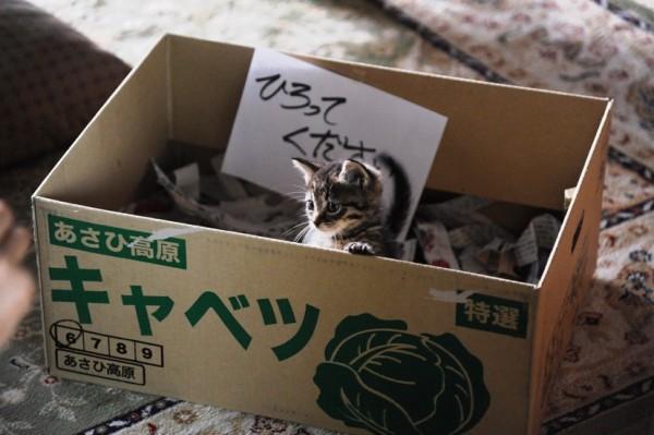 160313sekaneko02 600x399 - ずっと一緒にいてほしい、猫の写真を大募集。公式インスタ猫まみれ