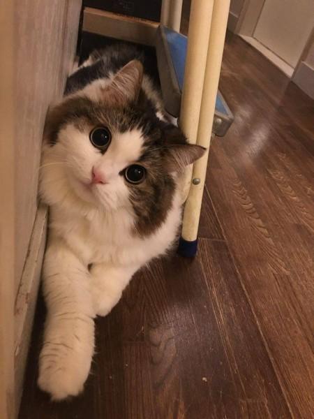 160319cat 450x600 - 本日の美人猫vol.179