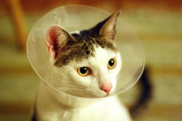 160326catcollar 600x400 - WEBからセカンドオピニオン、猫の病気の「症状辞典」と「医療相談」