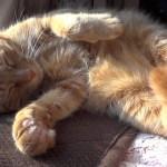日なたぼっこに微睡む茶猫、伸びと縮みのフルコース
