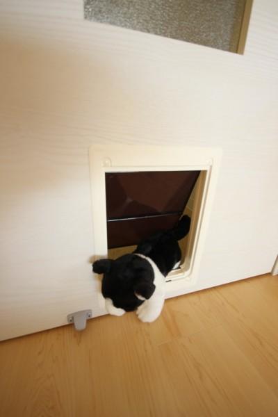 160328myuhouse06 1 400x600 - 猫が主役のマンション誕生、1棟丸ごと猫用フルリノベーション
