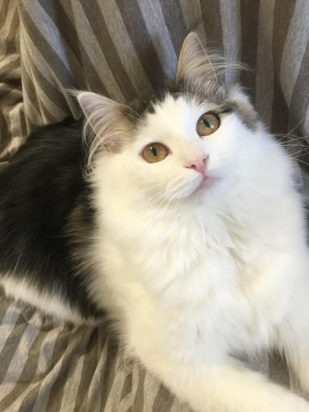 160409cat 450x600 - 本日の美人猫vol.182