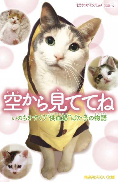 160413batako02 388x600 - 自らの血で猫を救った、「供血猫」ばた子の物語