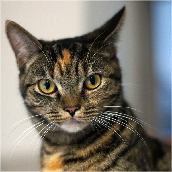 160428cat 600x600 - 本日の美人猫vol.185