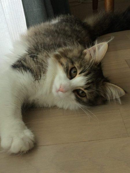 160504cat 450x600 - 本日の美人猫vol.186