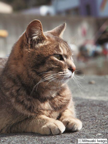 160517nekolion 450x600 - ネコライオン展今年も開催、三越本店猫イベ満載