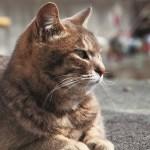 ネコライオン展今年も開催、三越本店猫イベ満載
