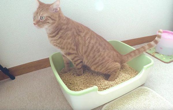 160524toilet 600x382 - 猫のトイレの最中の、あの神妙な顔を集めるとこうなる