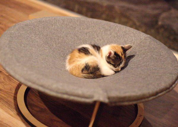 160613nekoniwa01 600x428 - 支援のおかげで猫もスヤスヤ、てしま旅館の「猫庭」完成