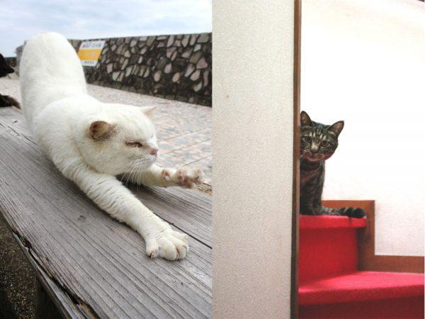 160614artcat 600x450 - 猫とアートの関係を大家の絵画でひもとく講座、矢来町で開催