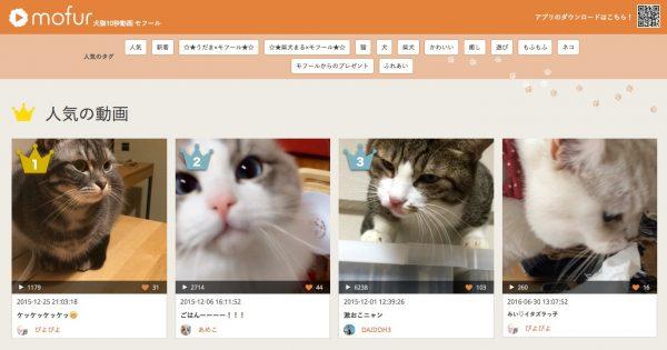 160701mofur 600x315 - 猫の10秒動画アプリ、かわいい動きにリピート必至