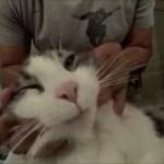 プロによるインド式フェイシャルマッサージ、猫もほおけて大あくび