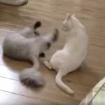 当たらぬ届かぬ猫キック、波動で倒す達人の技