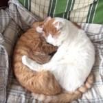 なぜだかカレーが食べたくなる、2匹の猫の寝姿見れば